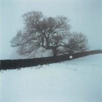 Oaktree Snowball, 1994